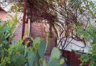 Stairs with prickly pear